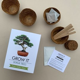 Grow It Bonsai Trees Gift Box
