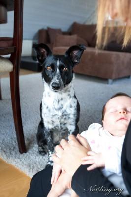 Hund-Kind