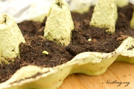 Erbsen-Pflanzen