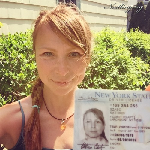 New-York-drivers-license