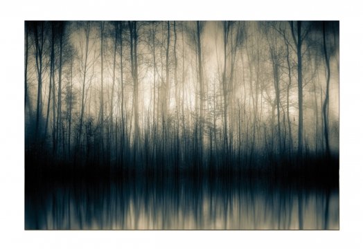 Forest-whispers-12080-120100-1