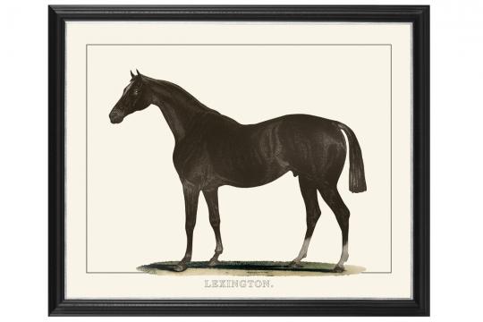Webb horse