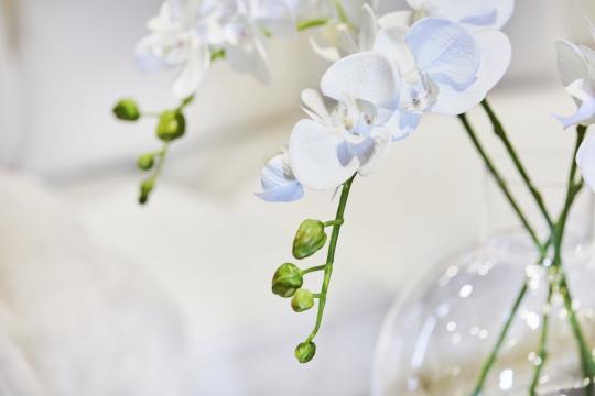 Webbild snittblomma orchide 70-2
