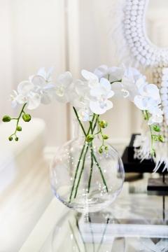Webbild snittblomma orchide 70