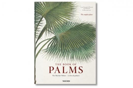 Webbild palms