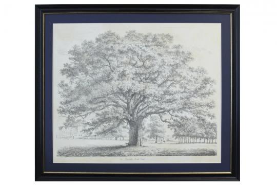 Webbild oak