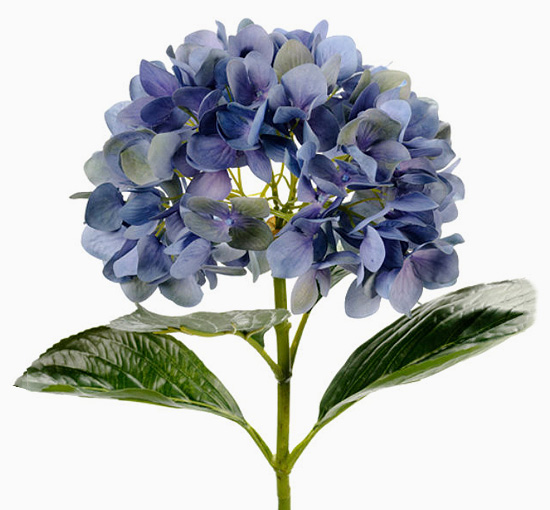 Hortensia bla 65 cm snittblomma