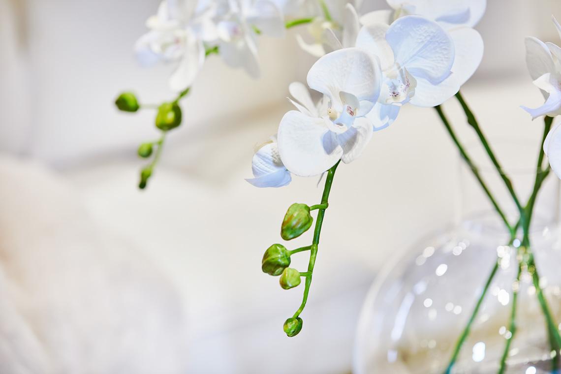 Snittblomma orchide 70cm