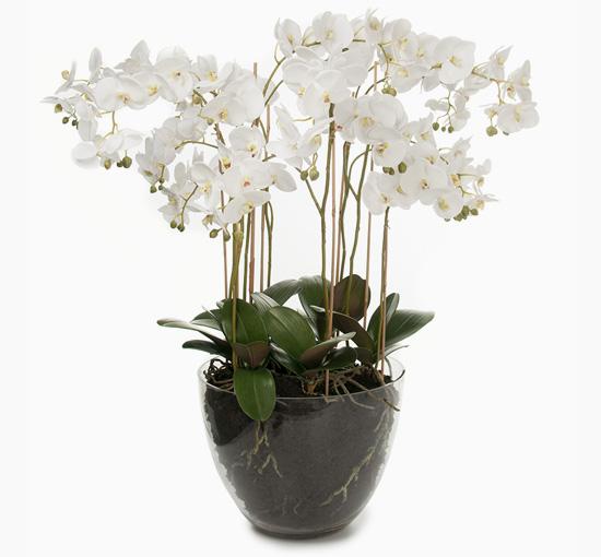 Orchide i kruka 90 cm