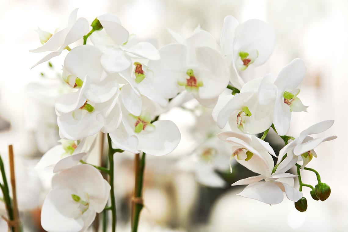 Orchide 105cm