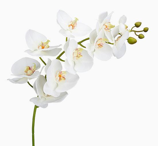 Orchide vit 105 cm snittblomma