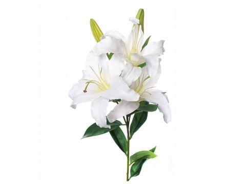 Lilja snittblomma