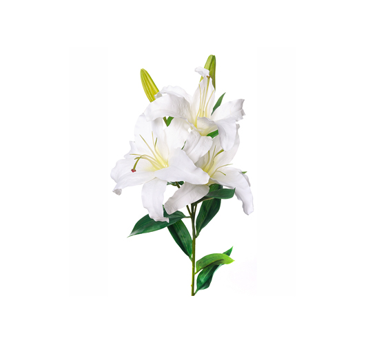 Listbild-snittblomma-lilja