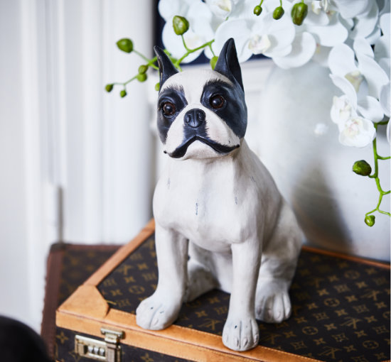 Listbild french bulldog