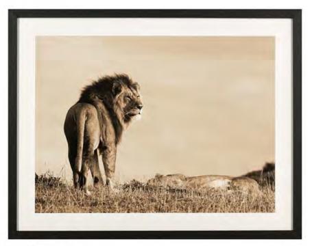 Tavla-lion-2