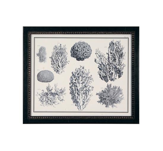 Tavla-archive-coral-1-1