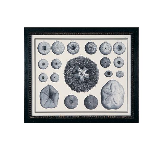 Tavla-archive-coral-3-11
