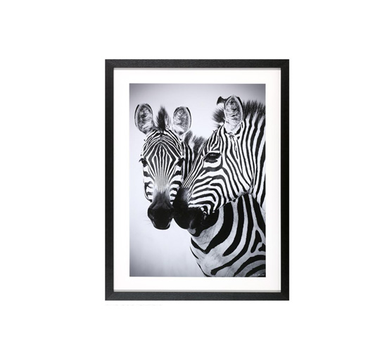 Zebra tavla 1
