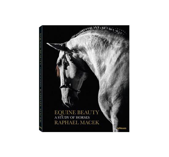 Equine beauty 1