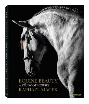 Equine beauty 2