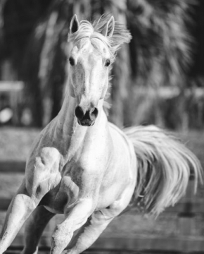 Equine beauty 5