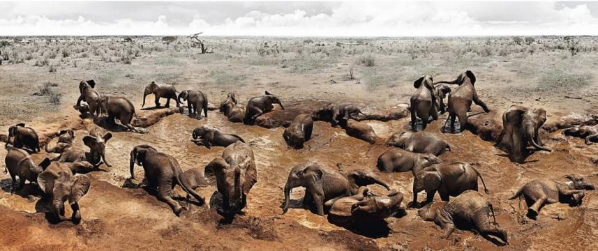 Elephants in heaven 3