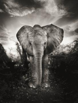 Elephants in heaven 4