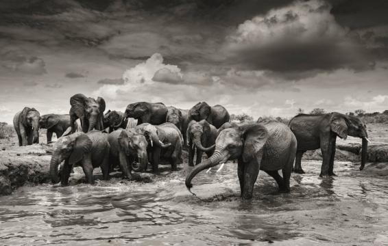 Elephants in heaven 5
