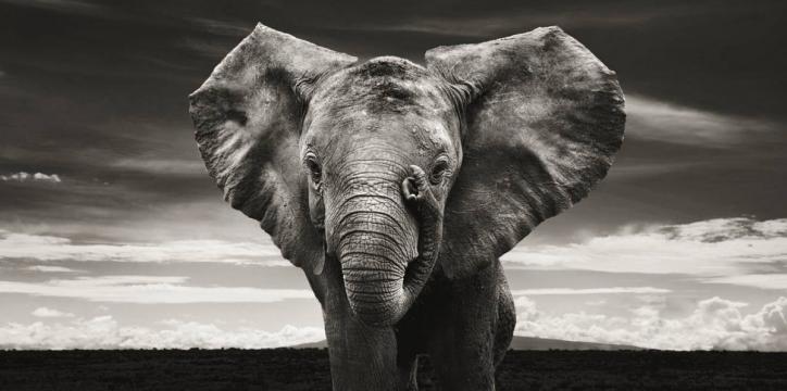Elephants in heaven 6