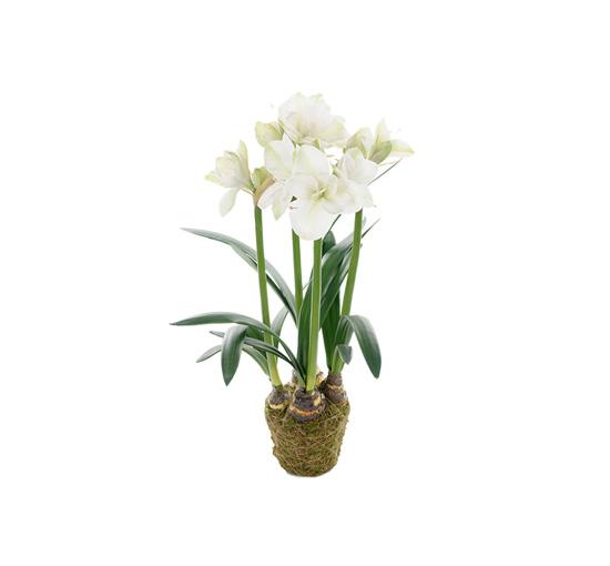 Amaryllis-white-100 1
