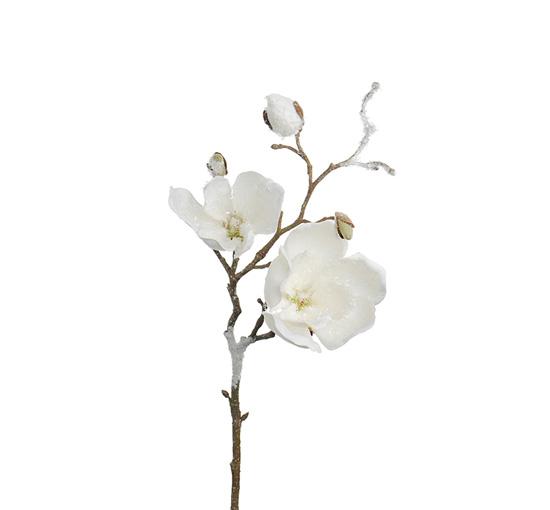 Magnolia-50 1