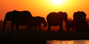 Ambiente. Giornata mondiale degli elefanti