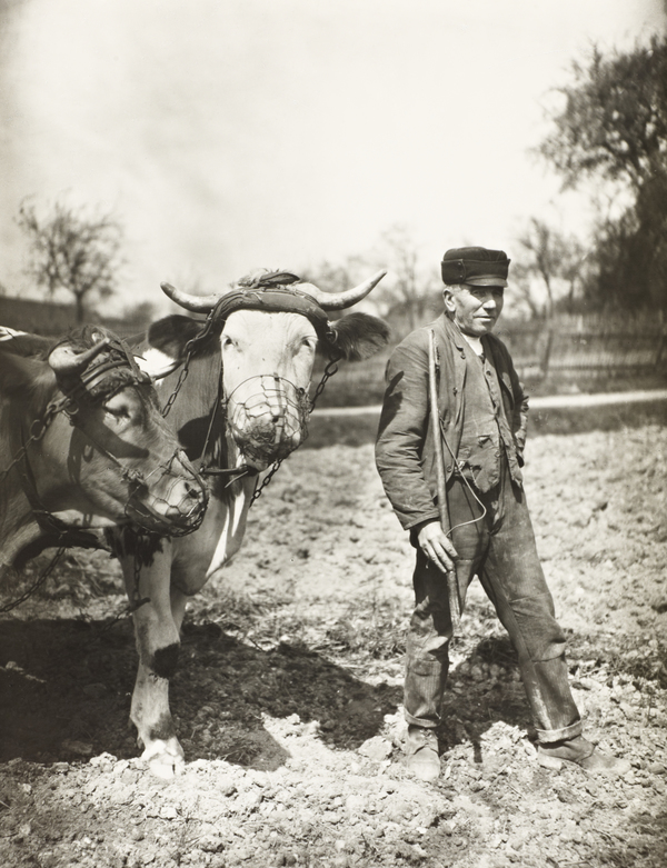 Farmer Working the Fields, about 1930