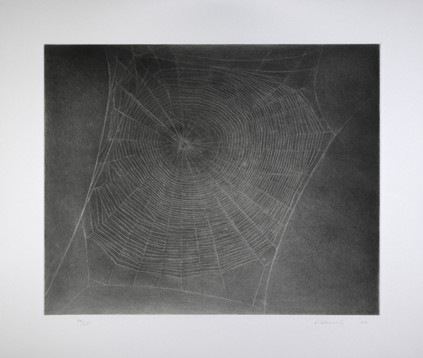 Untitled (Web 4)