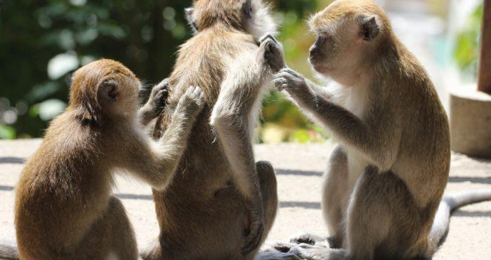 monkeys-2084236_1920