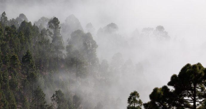 fog-571786_1920