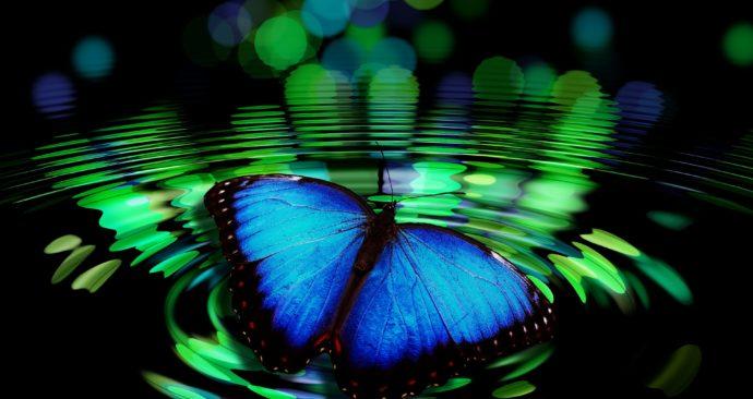 butterfly-492536_1920