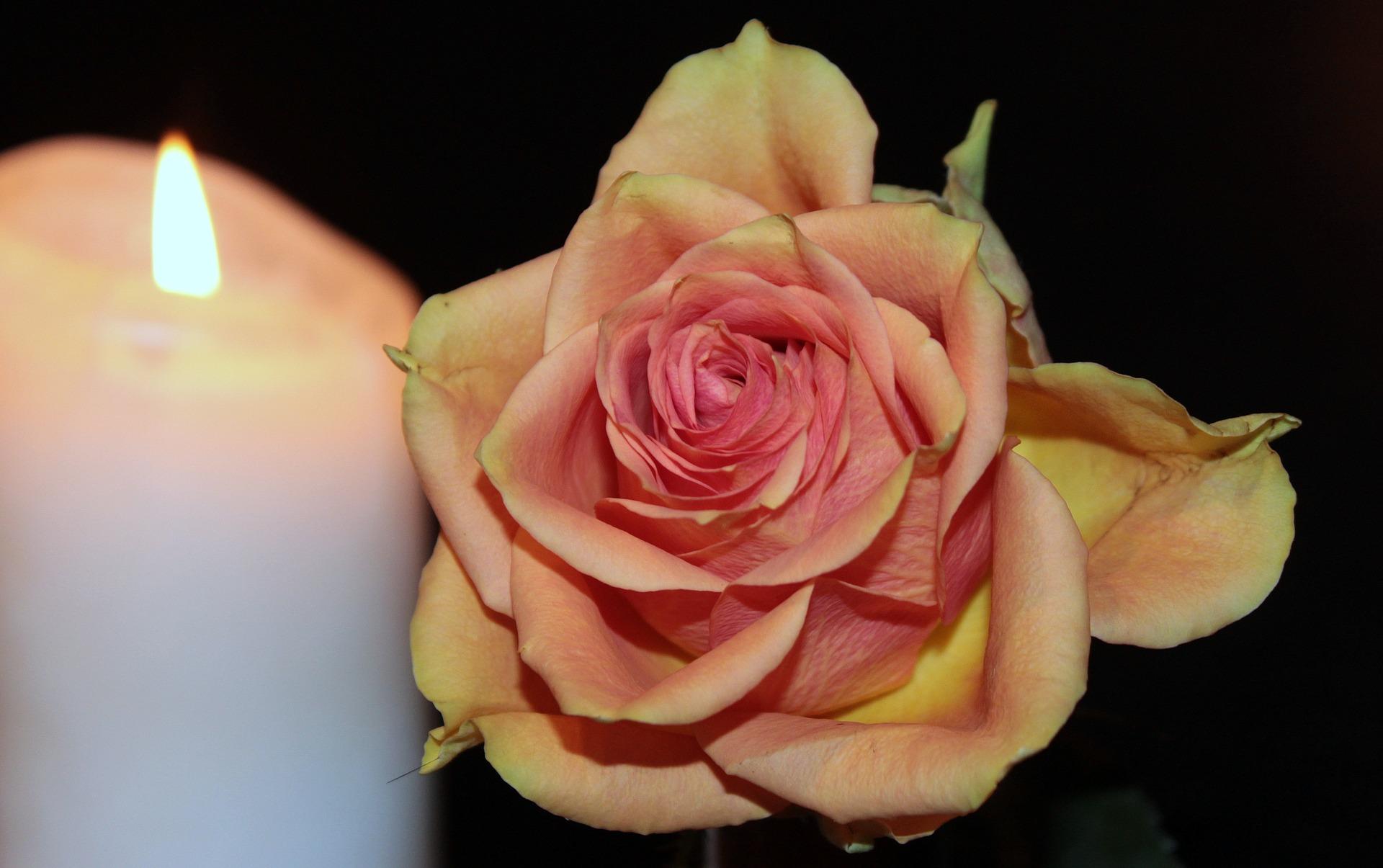 rose-1273723_1920