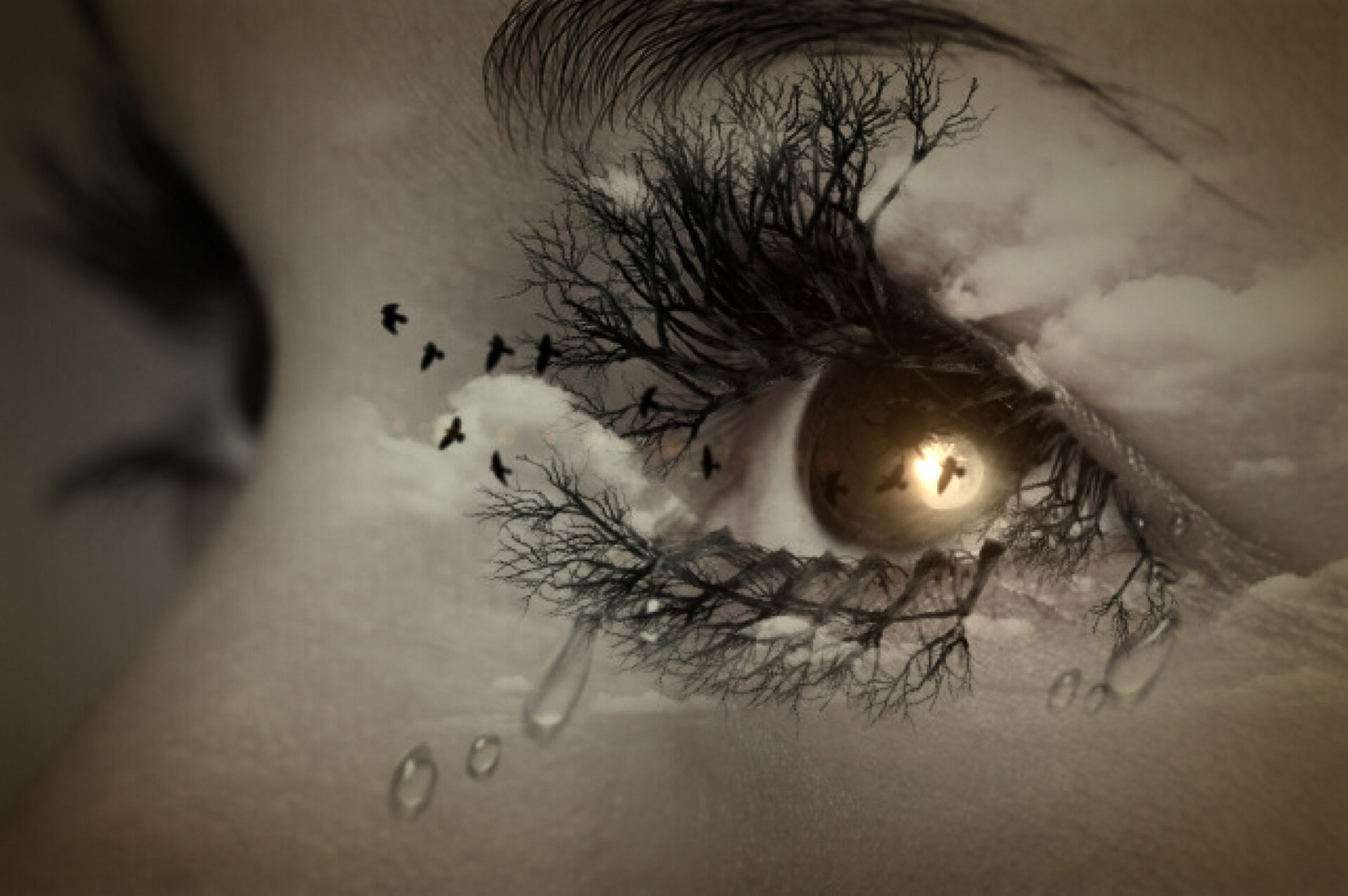 eye-447428_1920