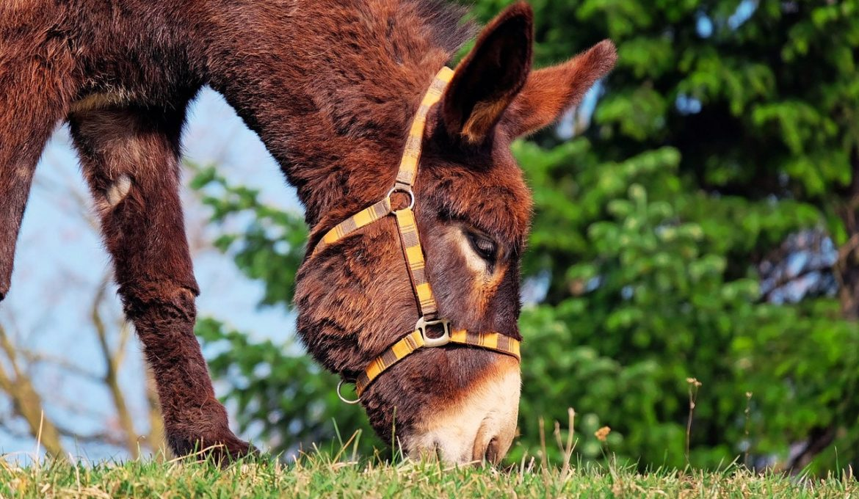 donkey-1268897_1280