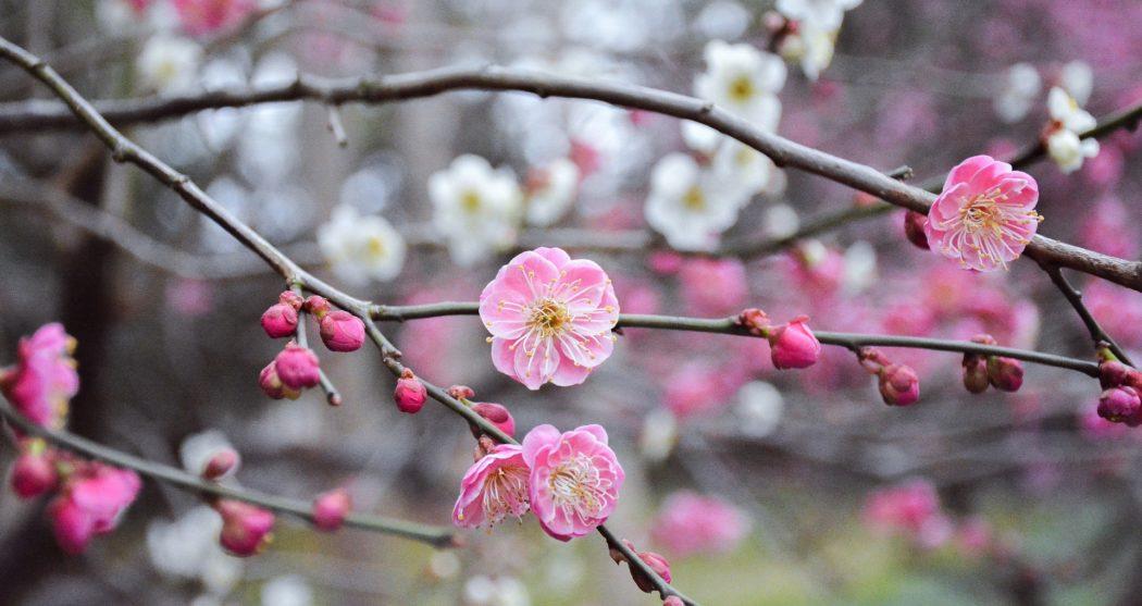 flower-3227055_1920