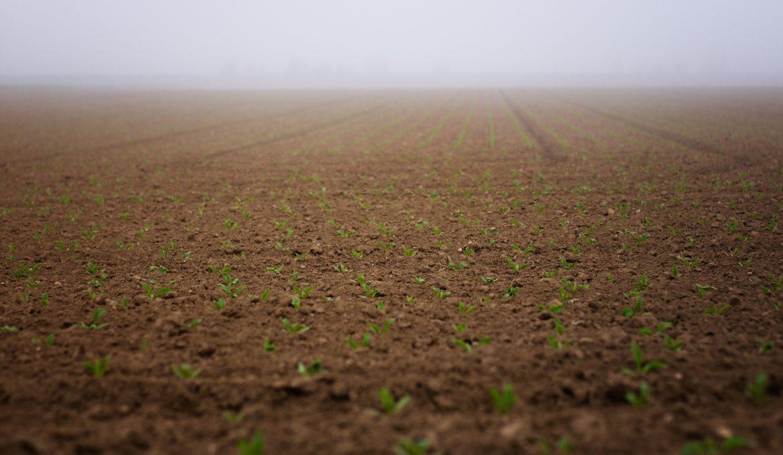 seedlings-4183249_1920