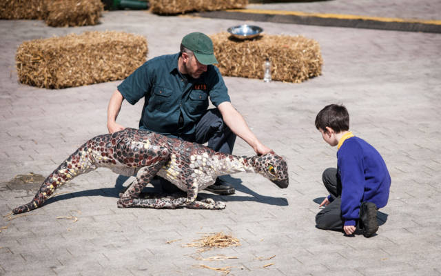 Photo from NNF12 show Dinosaur Petting Zoo, a little boy kneels down, looking at a small dinosaur puppet.