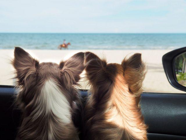 ¿Cómo viajar a Miami con tu mascota?