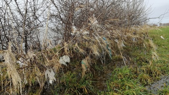 Plastic rivierafval in struiken