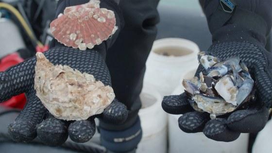 oesterbroed-de-rijke-noordzee