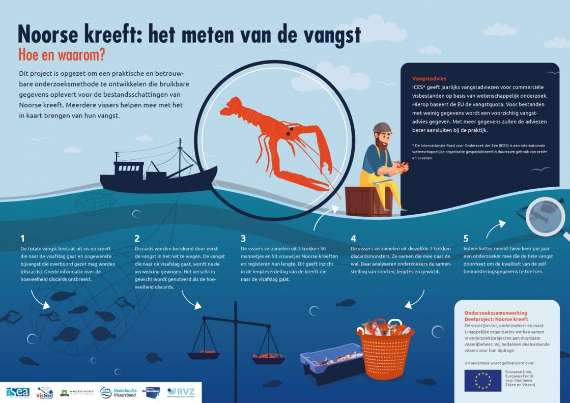 Infographic Noorse kreeft-1