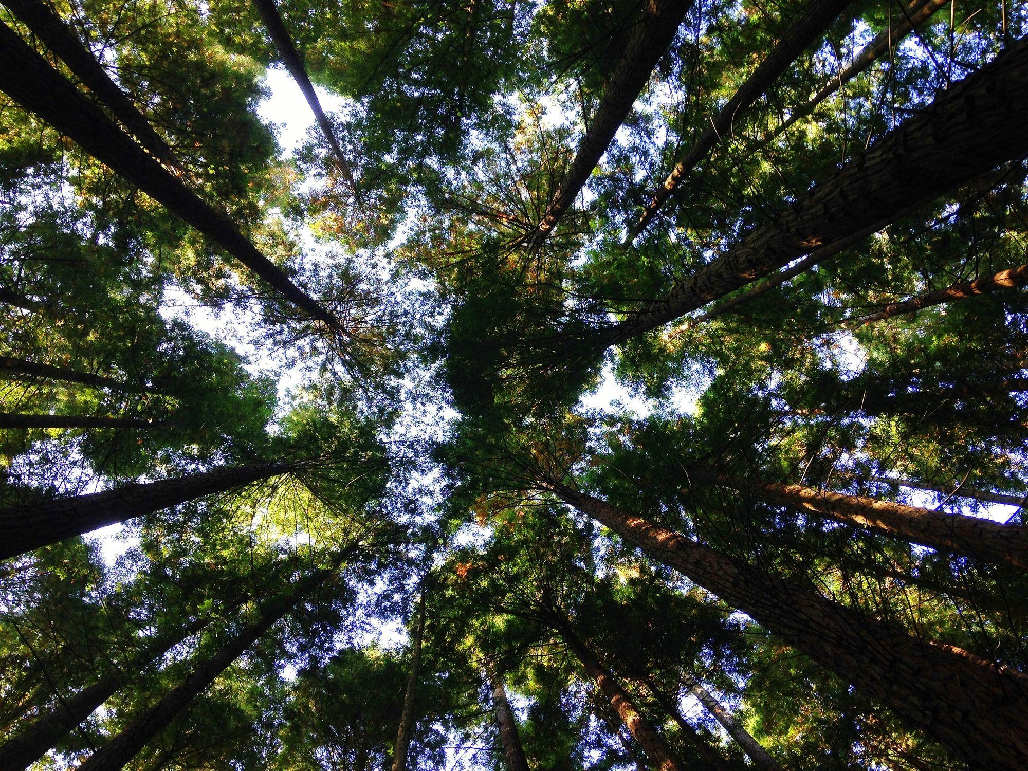 Miljø er 1 af 3 elementer i ESG