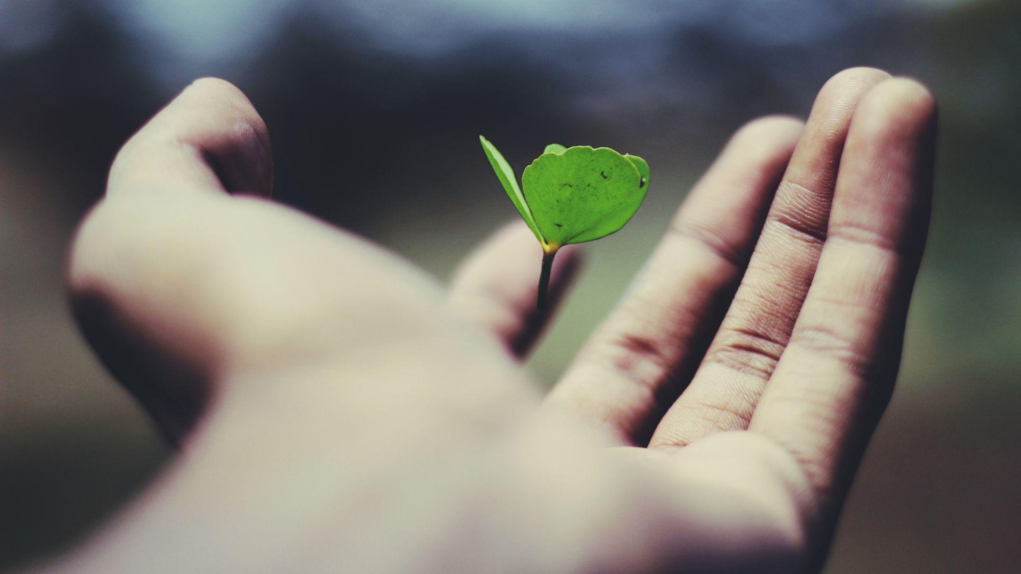 Start en bæredygtig og ansvarlig investering i dag
