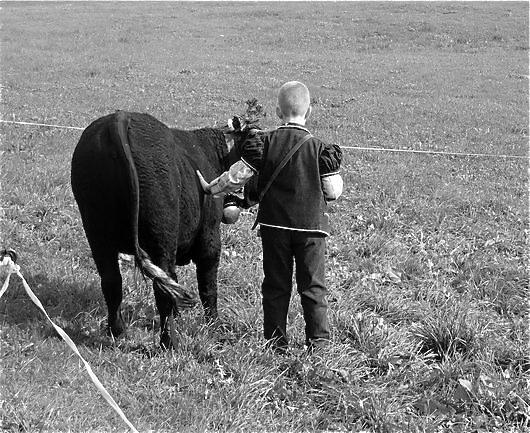 Foire d'élevage